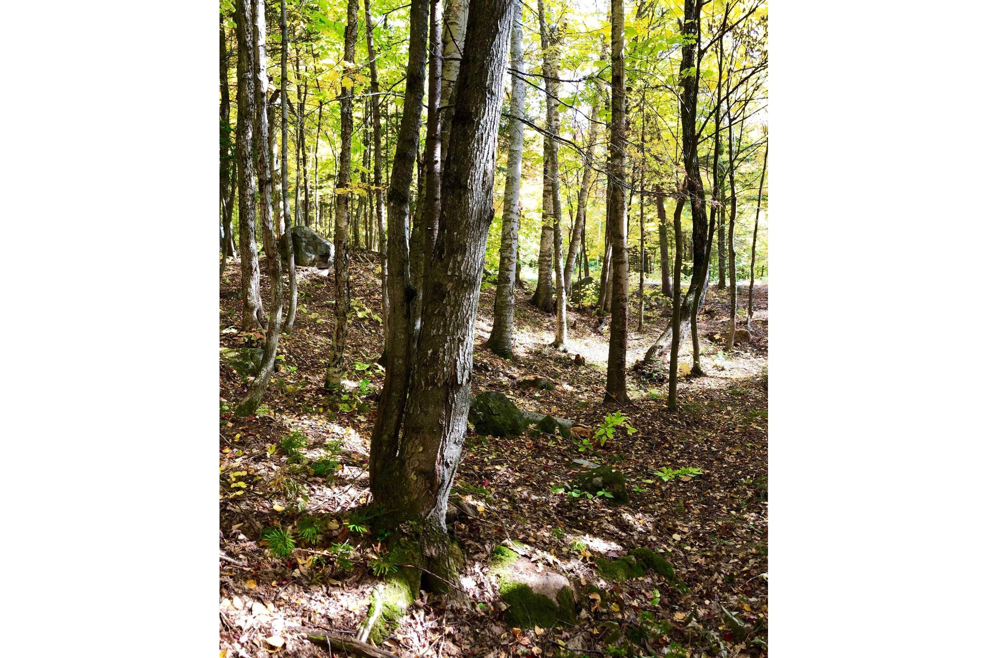 image 1 - Land For sale Wentworth-Nord
