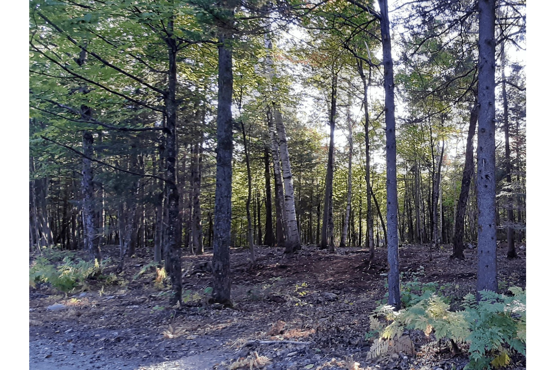 image 4 - Land For sale Wentworth-Nord