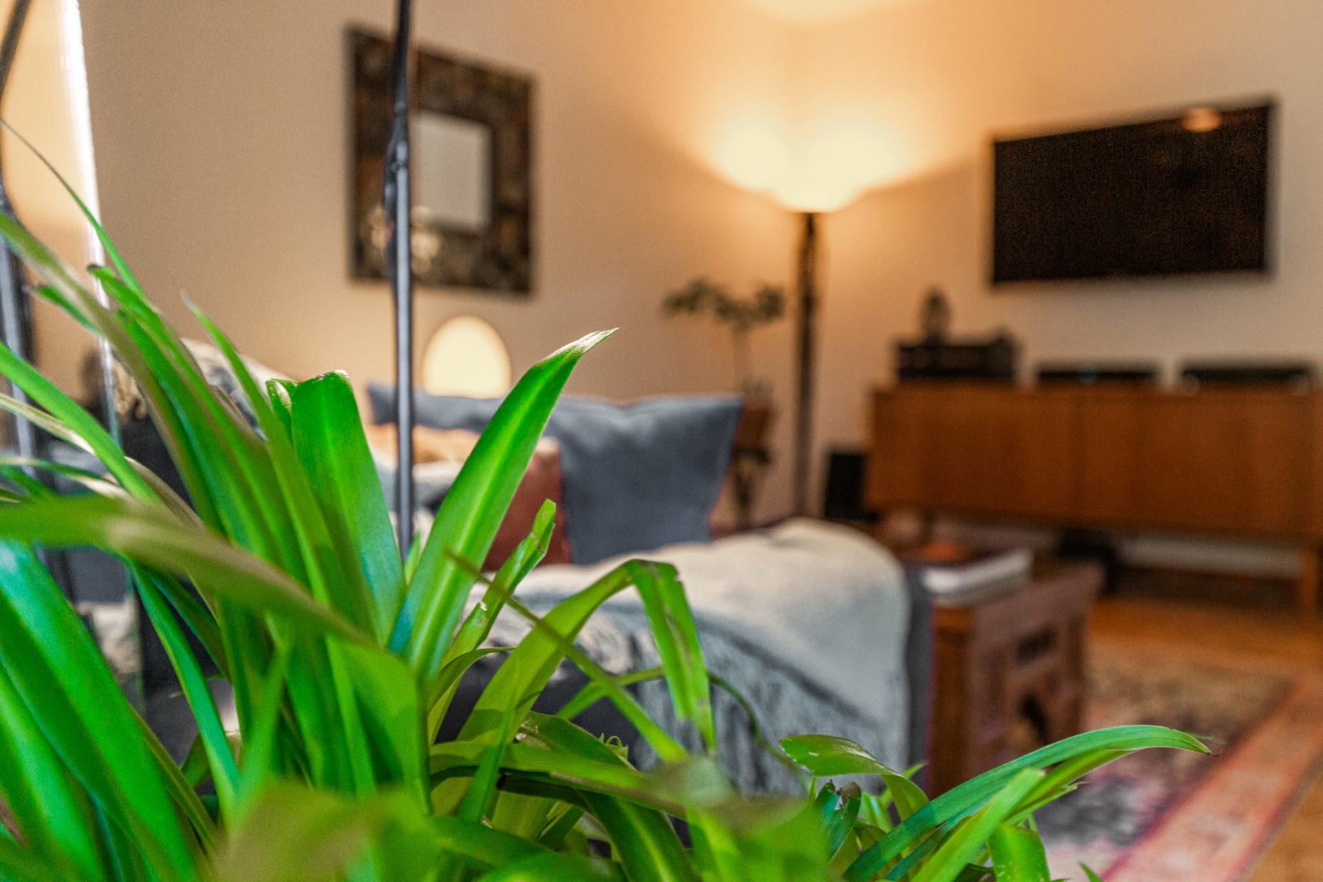 image 5 - Apartment For sale Le Plateau-Mont-Royal Montréal  - 6 rooms